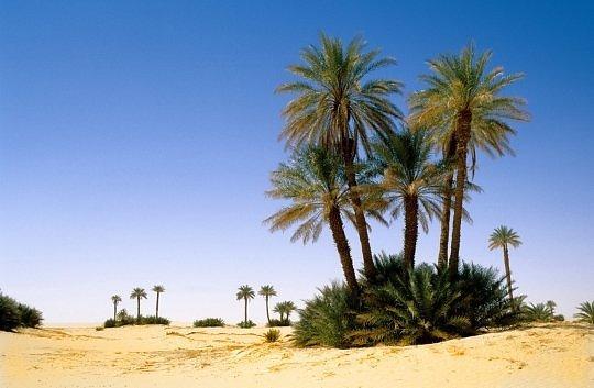 Оазис в пустыне Нигера