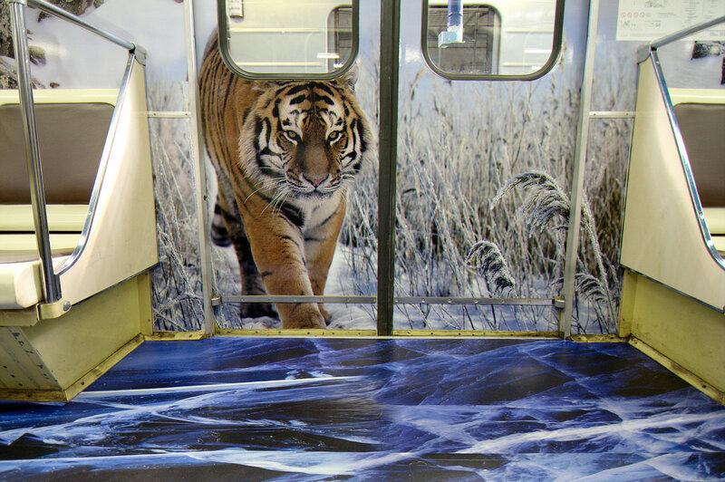 Тигр в зимнем лесу