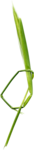 ldw_UnderPalmTree_grass3.png