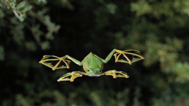 Летающая лягушка видео смотреть онлайн