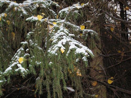 Первый снег 2014