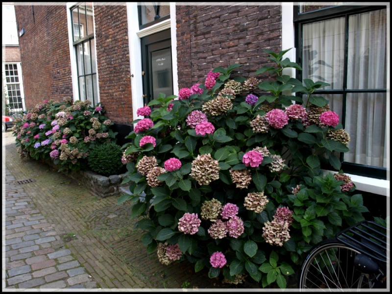 holland1 221.jpg