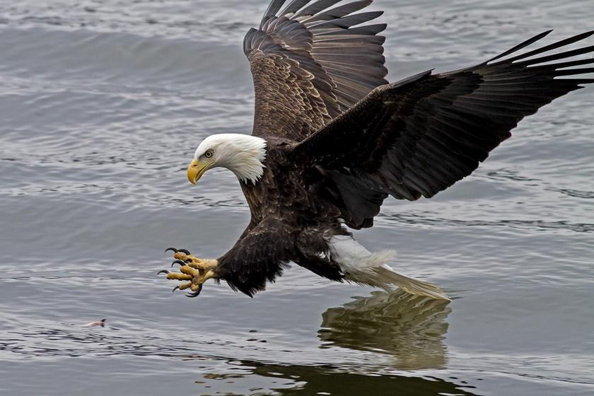 Удивительные фотографии окружающего мира, природы, людей и животных 0 141a80 2f4759fd orig