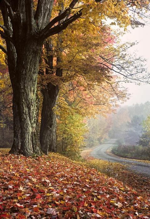 В Вермонте запретили рекламу из за красивых пейзажей штата 0 cb956 87f1f4cf orig