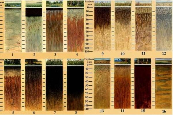 основные виды почв