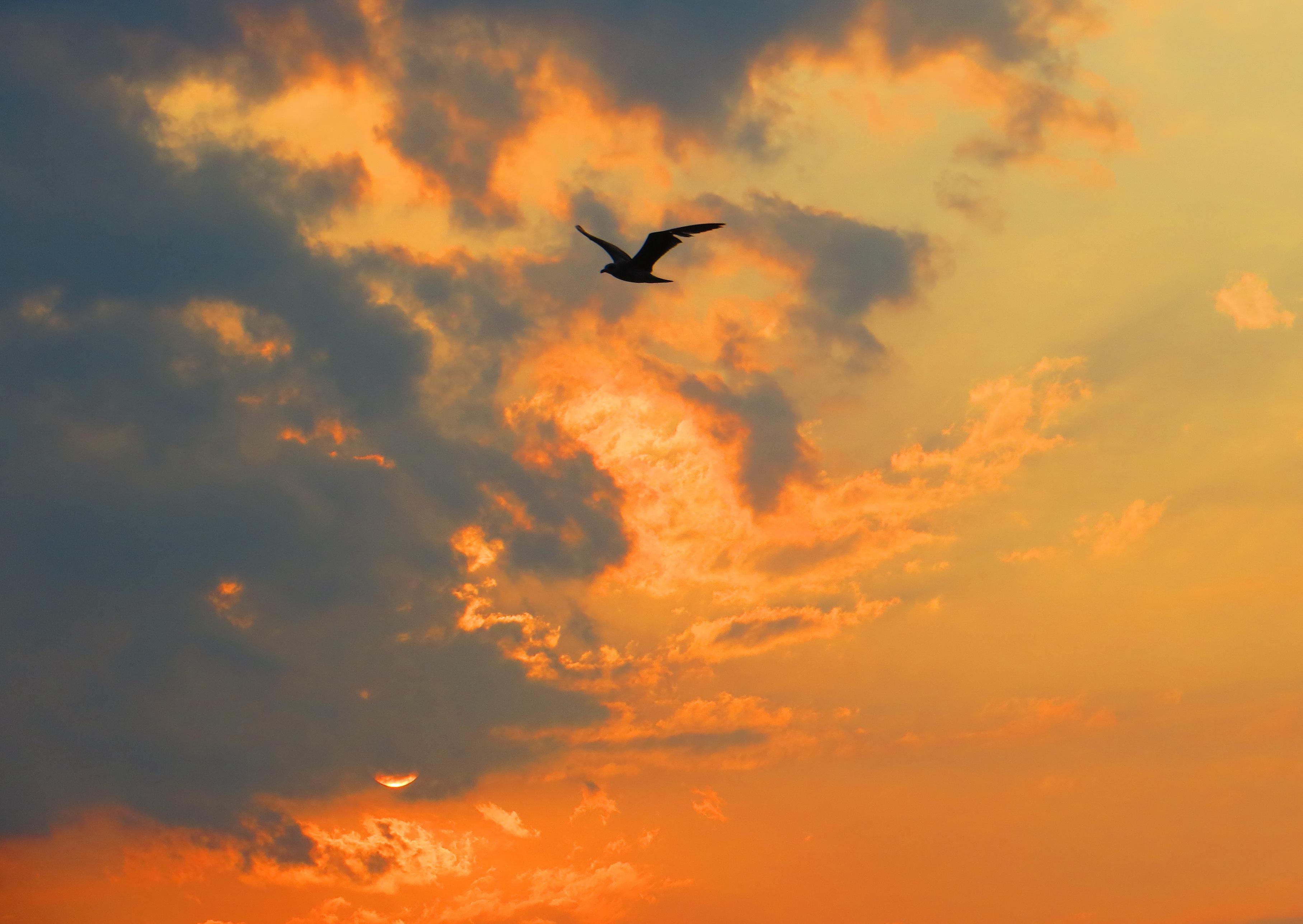 Чайка в небе на закате