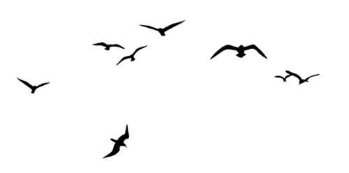 Уникальность косы  Национальный парк Куршская коса