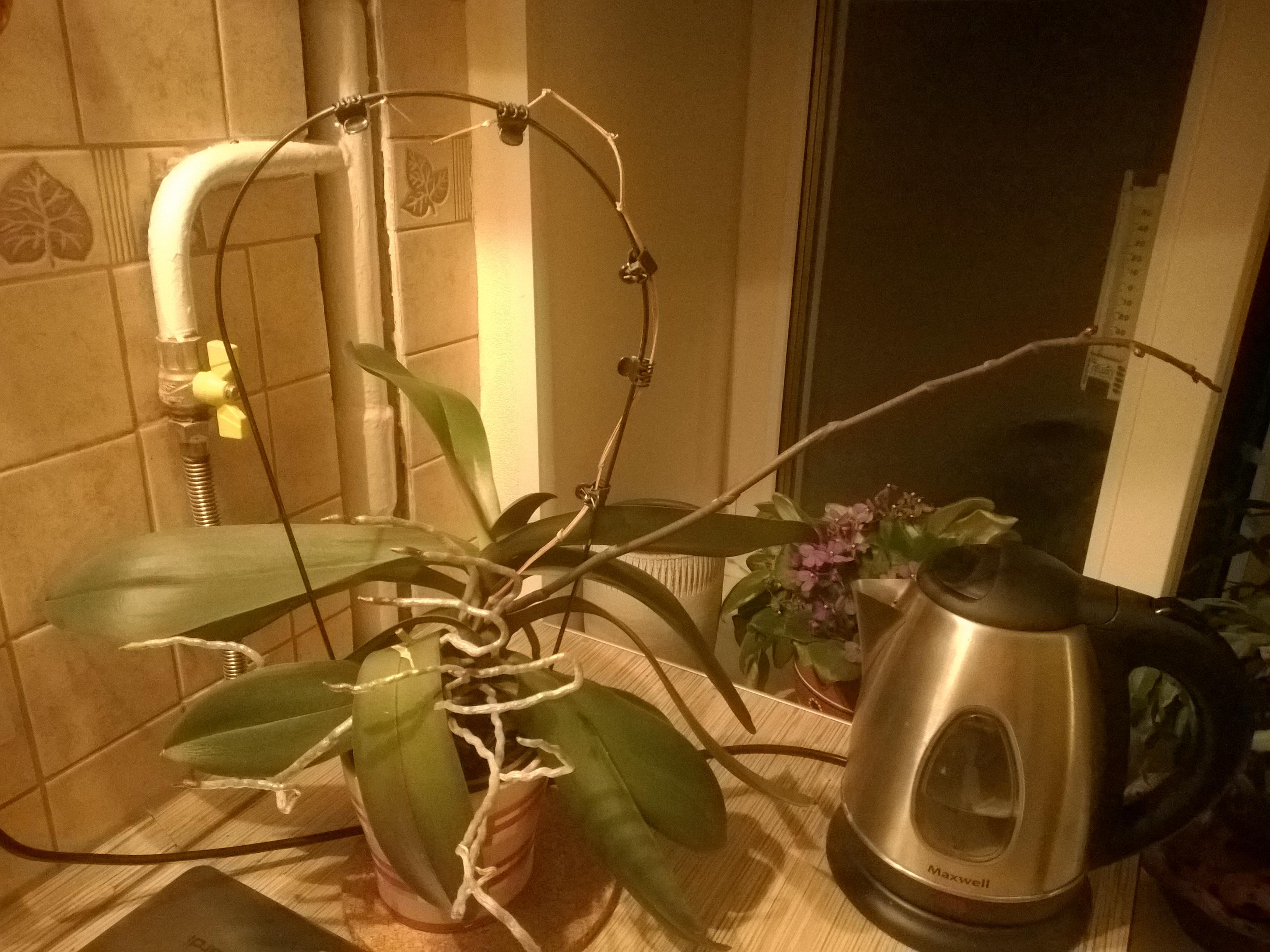 Орхидея (2).jpg