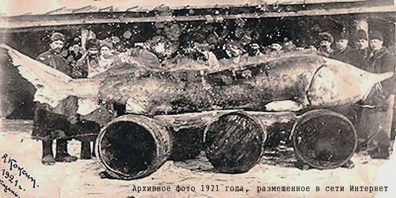 1921 год.jpg