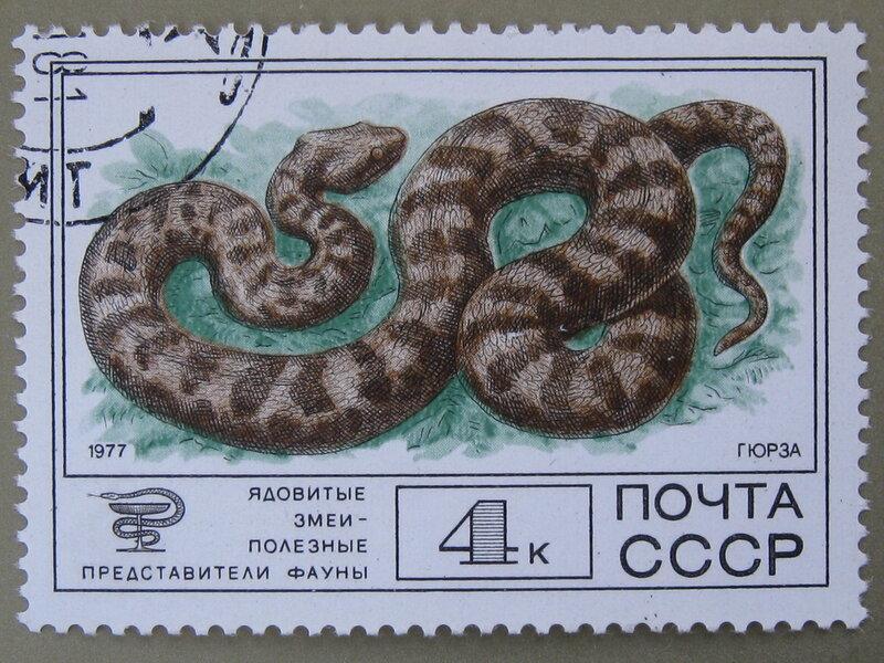Гюрза (Macrovipera lebetina)