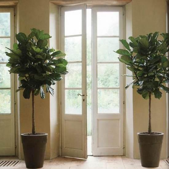 plant-best-single9.jpg