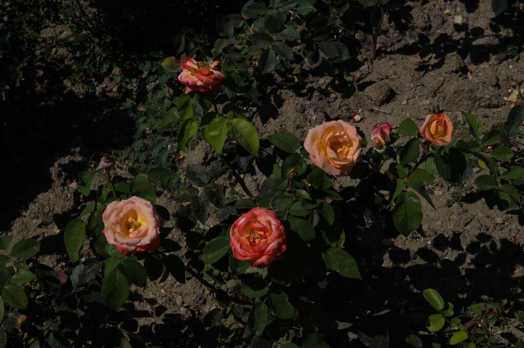цветы, крым,
