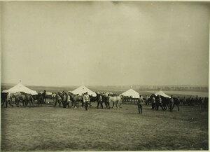 Лагерь  санитарного  конного транспорта