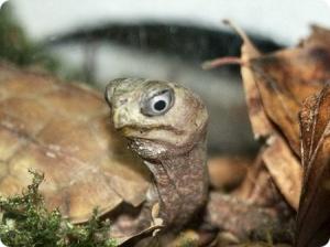 Домашний террариум: Рептилии и амфибии (Обучающее видео)