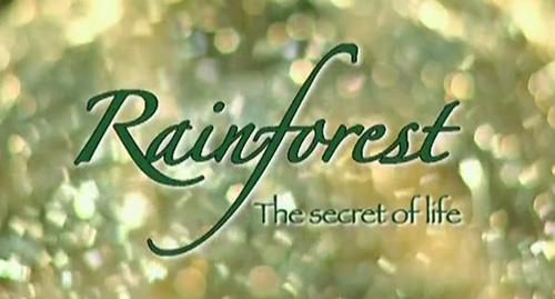 Леса животворящего дождя