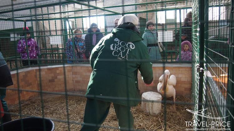 кормление животных в зоопарке Казани