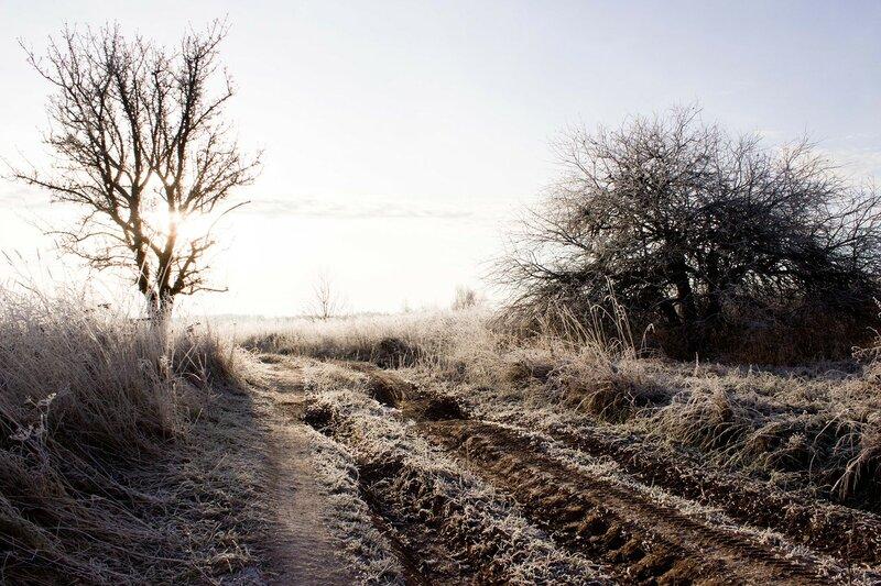 Псковская область, морозное утро в ноябре