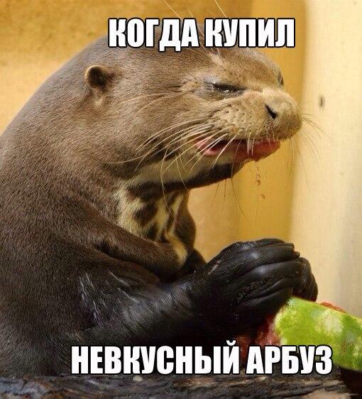 невкусный арбуз