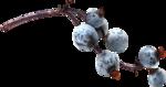 ldavi-fallingleavesautumntea-elderberries3.png