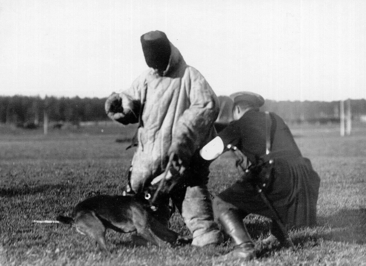 11. Демонстрация задержания собакой человека