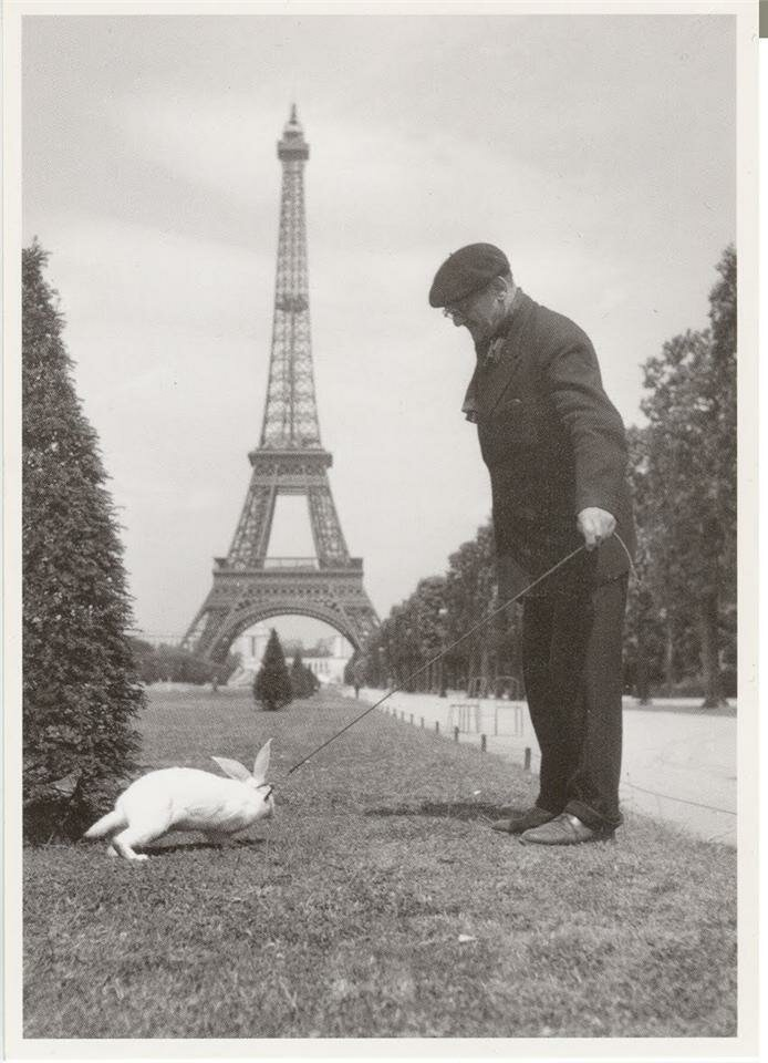 Прогулка с кроликом