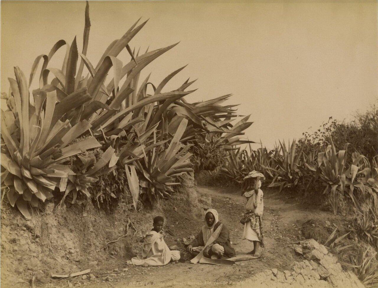 1880. На дороге Равин Раз-эль-Айн