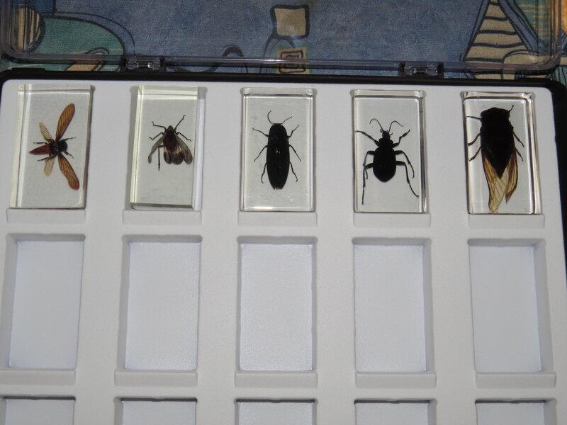 Коллекция насекомых VitaliySh