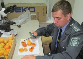 Россия отозвала партию фруктов из РМ и угрожает ввести новый запрет