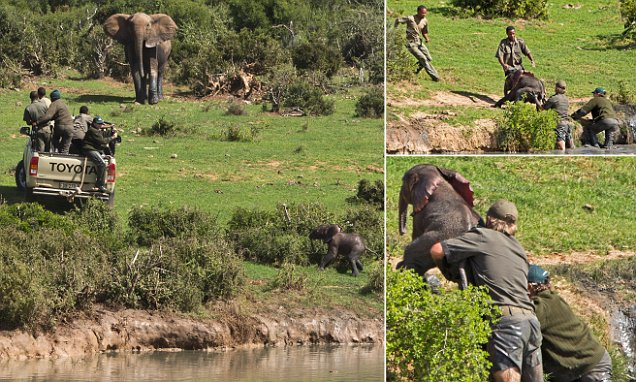 Baby Elephant River Rescue