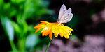 Бабочка-004.jpg