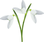 весенние цветы (19).png