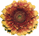 StudioMix74_FallMelody_mzimm_flower.png