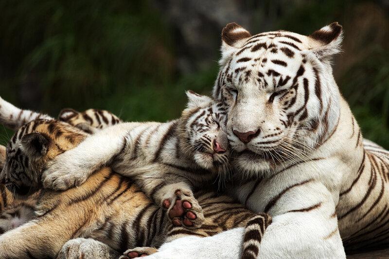 животные обнимашки