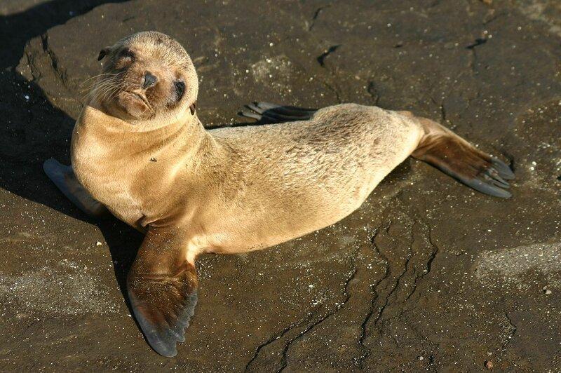 1280px-Galápagos_baby_sea_lion.jpg