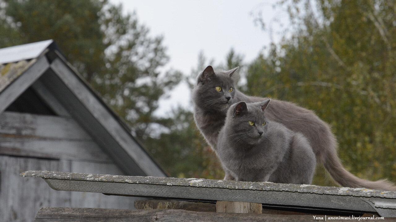 Простые деревенские коты