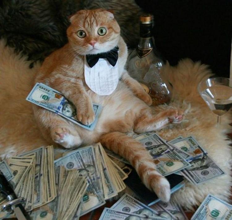 Money Funny Cat How Cat Earn Money