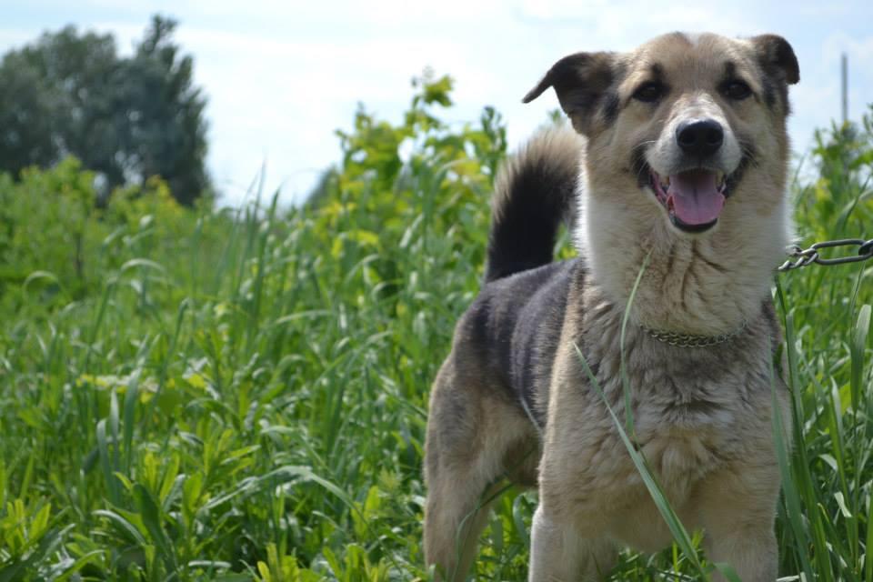 собака Люсек из приюта догпорт