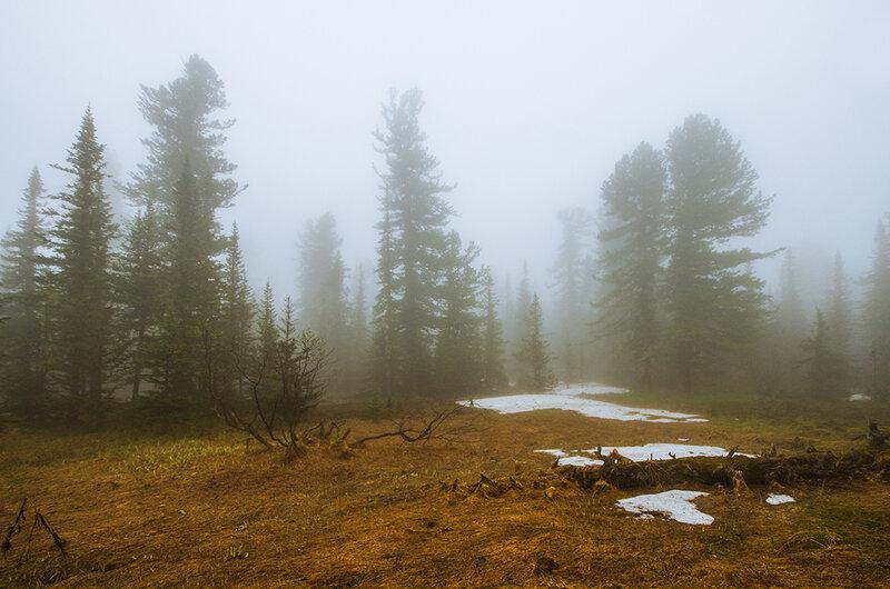 Тишина в лесу