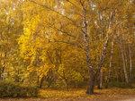 Осенний сон