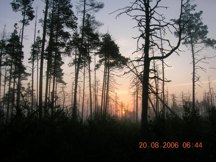 Аномальные зоны Новгородской области