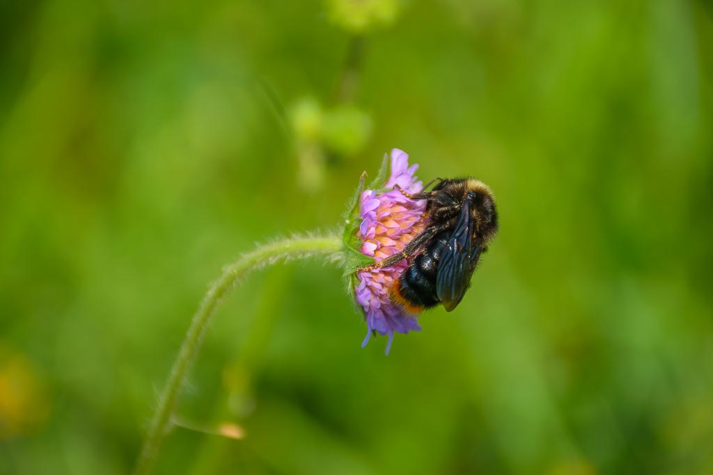 2. Nikon D5300 KIT 18-140 отзывы владельца и примеры фотографий. Где пчела, там и шмель (f/5.6, ИСО 100, выдержка 1/400 секунды, ФР=140 миллиметров)