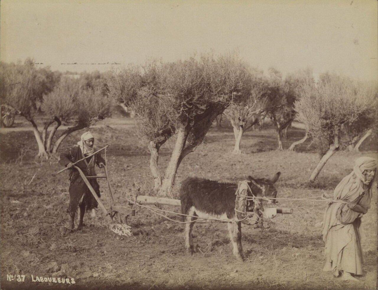1880. Крестьяне