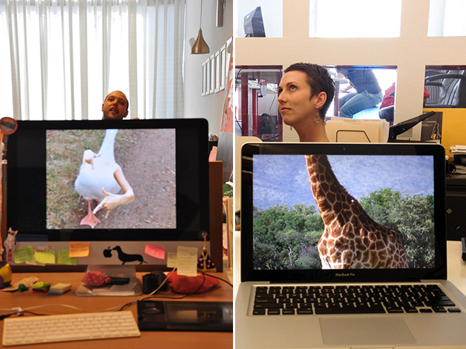 Office Safari0.jpg