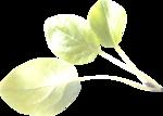 Lemony-freshness_elmt (56).png
