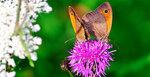 Бабочка-006.jpg