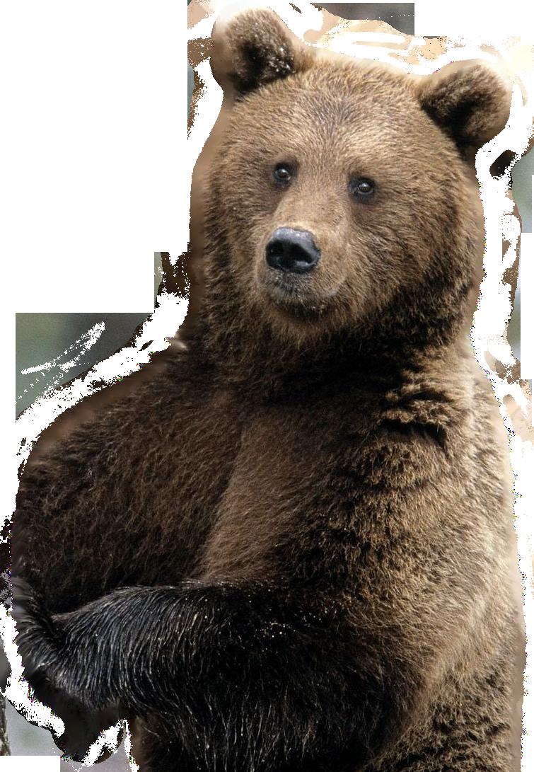 картинки для медведь на прозрачном фоне которым