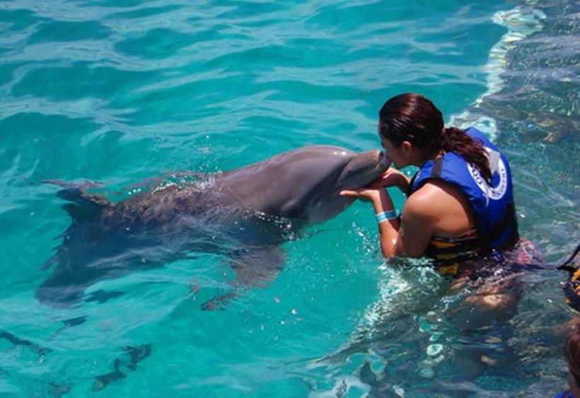 Беременная женщина и дельфин акушер 0 12e23d 29eb6164 orig