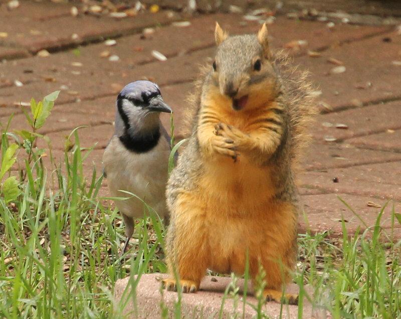 Blue Jay Beware -- I Don't Share