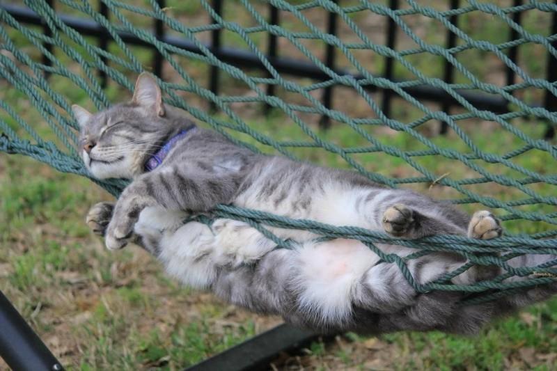 Koty-poznavshie-nauku-sna-36-foto