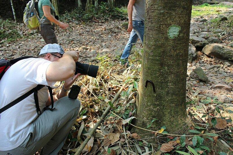 я фотографирую кивсяка на стволе дерева в заповеднике Namtok Samlan